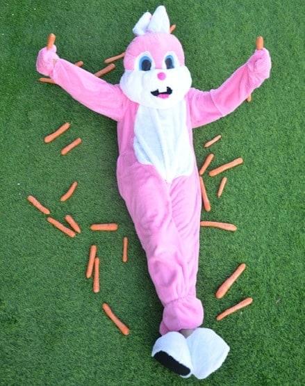 ארנב ראשי